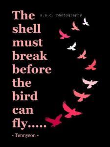 shellbroken